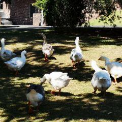 奧克蘭中央公園用戶圖片