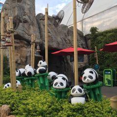 Giant Panda Adventure User Photo