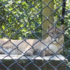 Two Rivers Wildlife Park User Photo