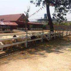 Swiss Sheep Farm User Photo