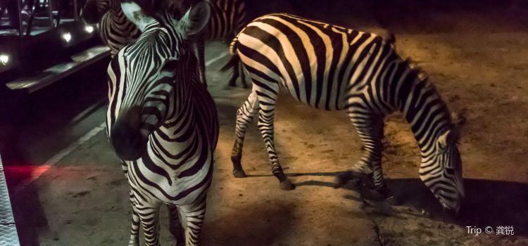 The Chiang Mai Night Safari2