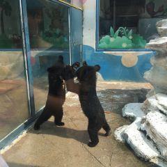 大連森林動物園用戶圖片