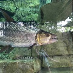 River Safari User Photo