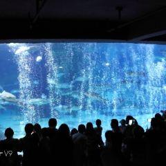 杭州長喬極地海洋公園用戶圖片