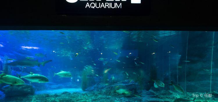 釜山水族館3