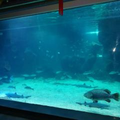 Shijiazhuang Sea World User Photo