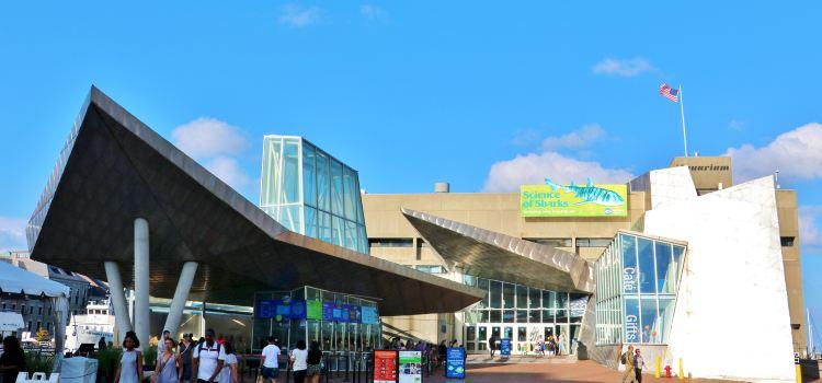 新英格蘭水族館