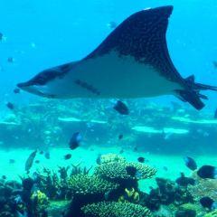 奇趣海洋世界用戶圖片
