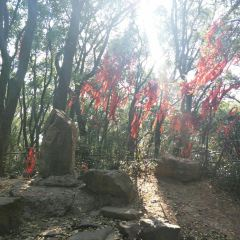 Sheshan National Forest Park User Photo