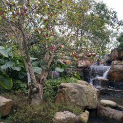 푸리 난쿤산 여행 사진