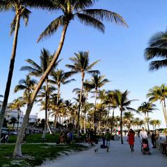 Miami Beach User Photo