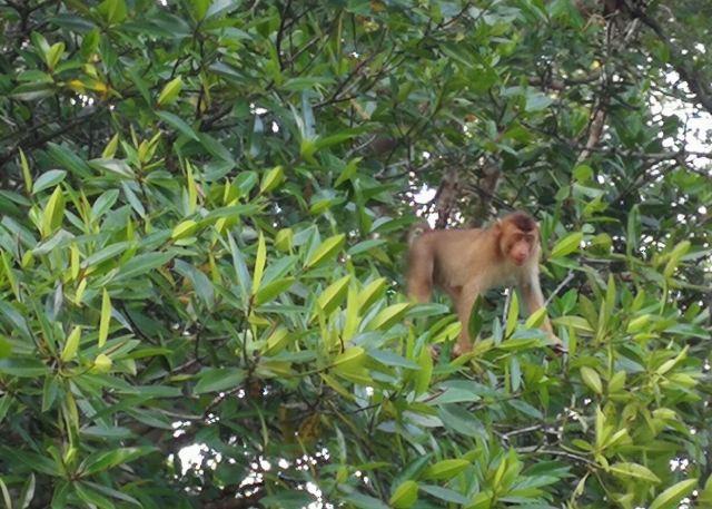 仙本那紅樹林