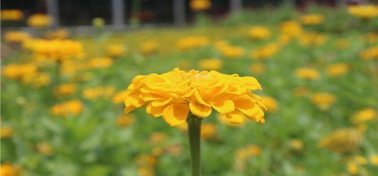 夢里水鄉百花園3