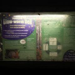 Hokitika glowworm cave User Photo