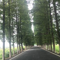 푸즈산 관광지 여행 사진