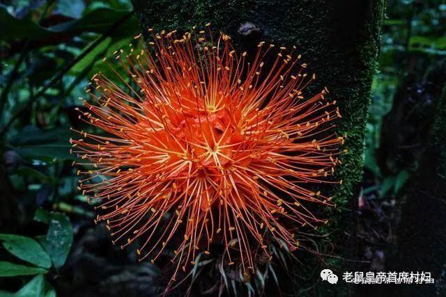 探祕夏威夷大島,從希洛小鎮出發~