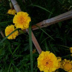 Chentian Garden User Photo