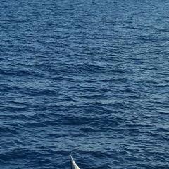 花蓮賞鯨豚用戶圖片