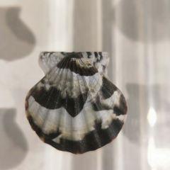 다롄 조개박물관 여행 사진