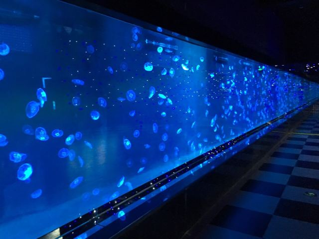 South Ocean Jellyfish Kingdom