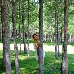 松樹塘用戶圖片