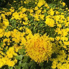 ウルムチ植物園のユーザー投稿写真