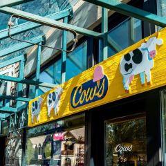 COWS Banff User Photo