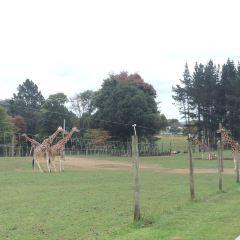 漢密爾頓島野生動物園用戶圖片