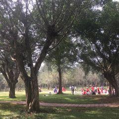 Jinniuling Park User Photo