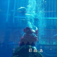Dubai Aquarium and Underwater Zoo User Photo