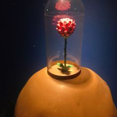 小王子博物館用戶圖片