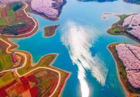 @重慶崽兒 龍湖邀請你去看世界最美櫻花!還送賞櫻大禮~