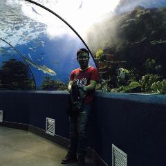 海底隧道用戶圖片