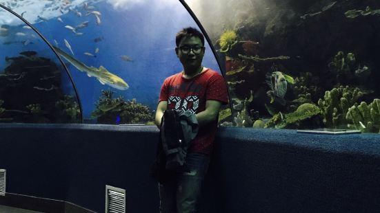 해저 터널