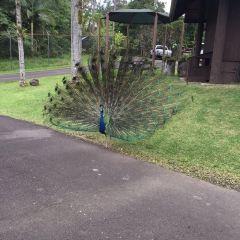 帕奈瓦熱帶雨林動物園用戶圖片