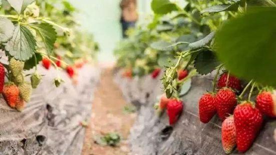 老呂草莓園