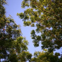 龍子湖風景區用戶圖片