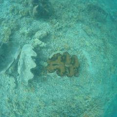 Shark Island User Photo