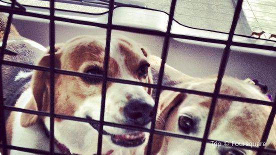 Crazy Beagle