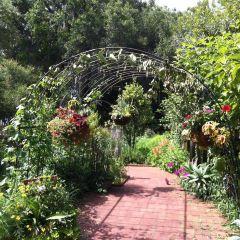 哈裡花園用戶圖片
