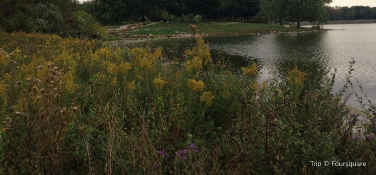 Homer Lake Forest Preserve3