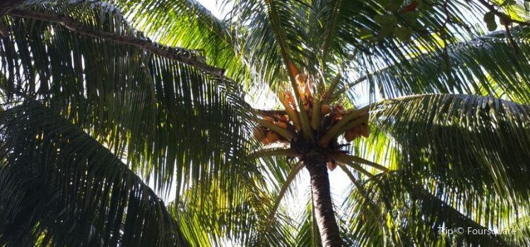 Playa Las Flores1