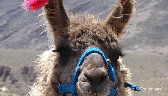 Caravana De Llamas Day Tours