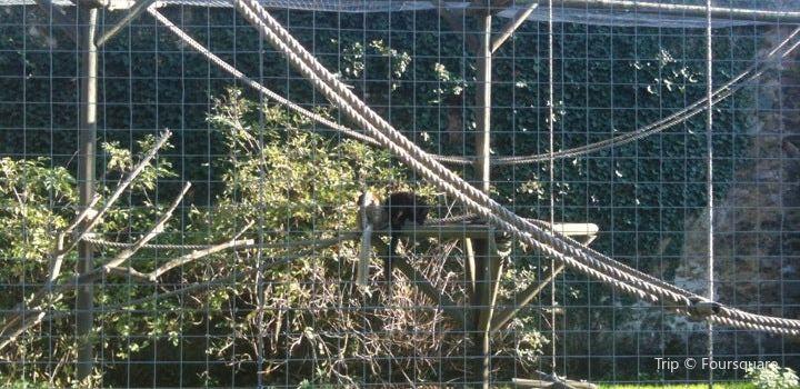 Parc Zoo du Reynou1