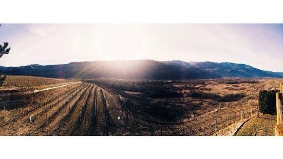 Platinum Bench Winery