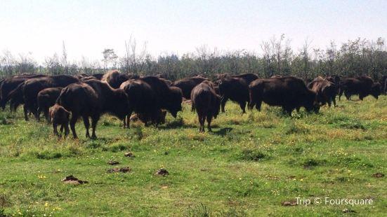 Les Bisons Chouinards