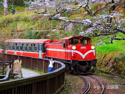 阿里山森林鐵路