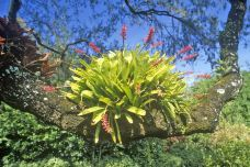 Cypress Gardens User Photo