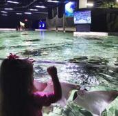 San Antonio Aquarium3