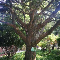 까모에스 정원 여행 사진